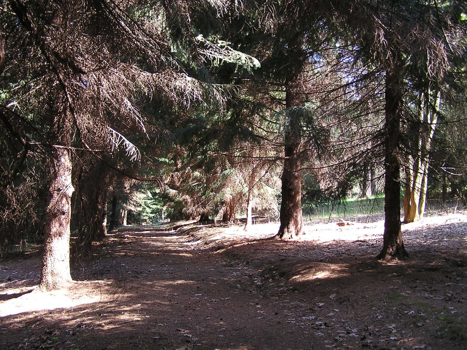Arboretum Střední lesnické školy