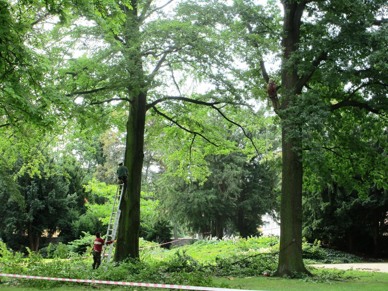 Stromolezci dokončili práce v zámeckém parku