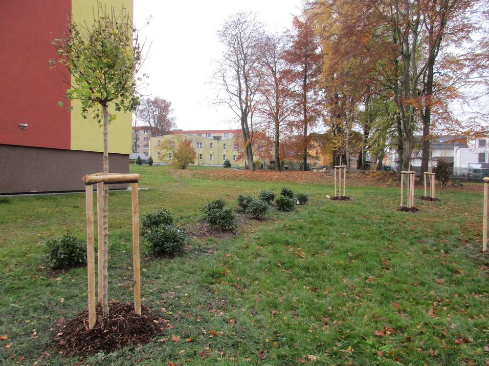 O (nejen nové) veřejné zeleni ve Šluknově